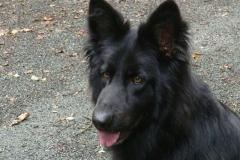 0023-Ferien-mit-Hund