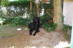 0025-Ferien-mit-Hund