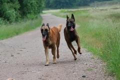 0034-Ferien-mit-Hund