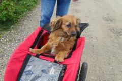 0035-Ferien-mit-Hund