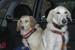 0037-Ferien-mit-Hund