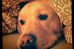 0054-Ferien-mit-Hund