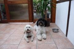 0068-Ferien-mit-Hund