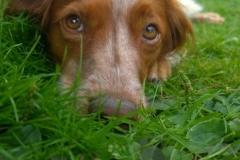 Ferein-mit-Hund-Eifel_Abenden