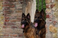 Ferien-mit-Hund-Deutschland-Eifel